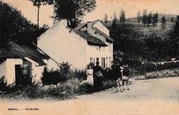 Emael Vache Bretonne Librairie Olyff Hasselt - Bassenge