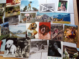 94 CARTES ANIMAUX - 5 - 99 Postkaarten
