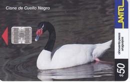 Nº 194 TARJETA DE URUGUAY DE UN CISNE DE CUELLO NEGRO - Uruguay