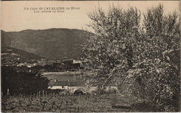 CPA CAVALAIRE-sur-MER In Coin En Hiver - Les Arbres En Fleur (1111195) - Cavalaire-sur-Mer