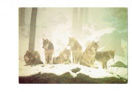 Cpm - LOUPS - Sauvegarde Des Carnivores Sauvages D'Europe ARAP - - Other
