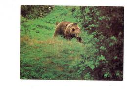 Cpm - OURS - Sauvegarde Des Carnivores Sauvages D'Europe ARAP - - Bears