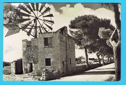 CPSM MALLORCA CAMPOS Molino Tipico , Moulin Tipique, Tipic Mill - Baléares - Windmills