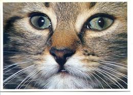 Lot De 2 CPM CHAT - éditions YVON - Voir Détails Dans La Description - Katzen