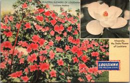 Louisiana State Flower The Magnolia And Beautiful Louisiana Azaleas In Bloom - Other