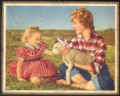 CALENDRIER GF 1959 - L'enfant Et L'agneau, Imprimeur Oberthur Rennes - Big : 1941-60