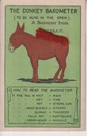 TheDonkey Barometer To Be Hung In The Open   ANE DONKEY EZEL ESEL MULES Donkeycollection - Altri