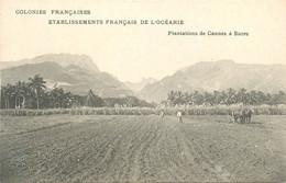 Plantations De Canne à Sucre * Tahiti Polynésie Françaises Iles Sous Le Vent * Océanie - French Polynesia