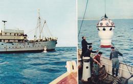 Bateaux : Navire Océanographique : Président THEODORE-TISSIER : Comité National De L'Enfance - N° 4 - Sonstige