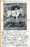White Sacred Bull Of Burmah, Weißer Heiliger Bulle Von Burma, 1905 - Vacas