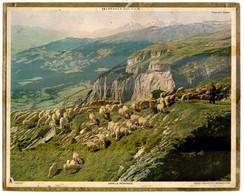 CALENDRIER GF 1960 - Troupeau De Moutons Et Berger Dans La Montagne, Imprimeur Oberthur Rennes - Big : 1941-60