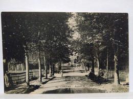 Cabourg. Avenue Du Centre - Cabourg