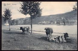 Belgique - Carte Postale - 1909 - Vaches - Bovins De Boucherie - Circulé - A1RR2 - Kühe