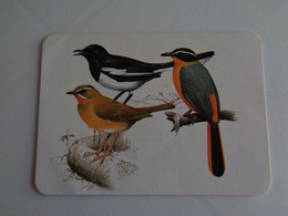 Birds Oiseaux Aves Gaiopas Porto Portugal Portuguese Pocket Calendar 1988 - Klein Formaat: 1981-90