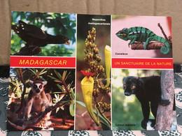 MADAGASCAR PERROQUET VASA CAMELEON LEMUR MACAO LEMUR CATTA - Madagascar