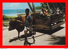 CPSM/gf.  VICTORIA.. (Seychelles).  La Digue.  Attelage Avec Boeuf Pour Promenade ... D700 - Seychelles