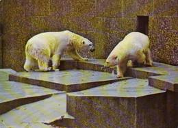 Zoo / Tiergarten / Wildpark (D-A358) - Sonstige