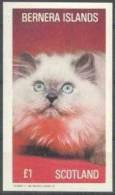 Bernera Islands Brittish Local Post Cat / Chat   Cats  Souvenir Sheet £1 - Hauskatzen