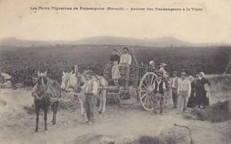 34 - HERAULT - Les Petits Vignerons De Puisserguier - Arrivée Des Vendengeurs à La Vigne - Other Municipalities