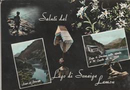 BELLUNO - LAGO DI SENAIGA - LAMON - SALUTI DA..............R9 - Belluno