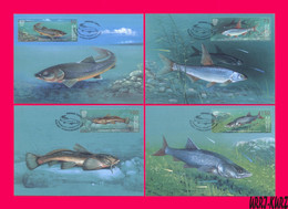 KYRGYZSTAN 2021 Nature Fauna Freshwater River & Lake Fish Fishes Mi KEP 166-169 4 Maxicards Maximum Cards Maxicard Card - Kyrgyzstan