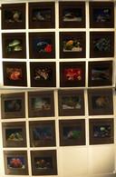 Série De 22 Diapos - Aquarium De Nouméa (Nouvelle-Calédonie) (voir Les 7 Scans) - Aquariophilie
