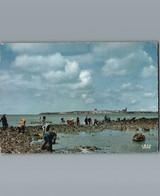 17 - Charente Maritime  - St Georges De Didonne - Cpsm Grand Format Dentelée  - Ramassage Des Huîtres Dans Les Rochers - Saint-Georges-de-Didonne