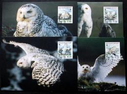 Greenland    1999   Snow Owls   Minr.331-34x   Maximum Cards  ( Lot 315 ) - Cartes-Maximum (CM)