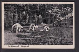 D34 /   Zoo Wuppertal , Känguruh 1943 - Unclassified