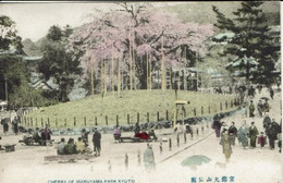 JAPAN-JAPON-KYOTO-CHERRY OF MARUYAMA PARK - Kyoto