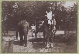 Paris. Jardin D'Acclimatation . Elephant Côtoyant Un Cheval Attelé . Citrate Circa 1900 . - Antiche (ante 1900)