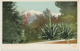 """USA Ca. 1910/20 Superb Mint Coloured Pc """"Snow Peaks In Southern California"""" - Other"""