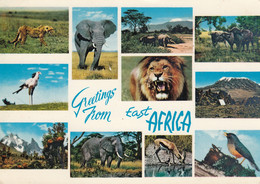 Uganda Cheetah Elephant Rhino Lion Buffalo Gazelle 1968 Nice Stamps Birds - Uganda