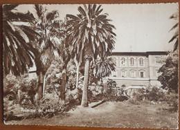CAPEZZANO PIANORE - CAMAIORE - LUCCA - LICEO SCIENTIFICO PARIFICATO MARIANUM CAVANIS - PALMIZIO NEL PARCO - 1960 - Lucca