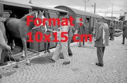 Reproduction Photographie Ancienne De L'arrivée Par Train De 102 Chevaux Hafer D'Irlande Pour L'armée Suisse En 1968 - Riproduzioni