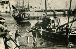 Photo Cpsm 85 LES SABLES D'OLONNE. Le Déchargement Du Thon 1959 - Sables D'Olonne