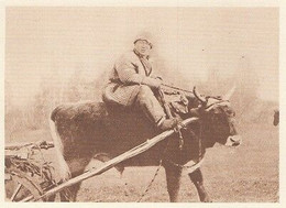 G0566 Siberia - Kirghize Sur Un Boeuf - Stampa D'epoca - 1926 Old Print - Stampe & Incisioni