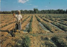 AGRICULTURAL RESEARCH  STATION RAS  AL KHALMAH - United Arab Emirates
