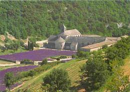 84 - Gordes - Abbaye De Sénanque - Monastère Cistercien - Vue Générale - CPM - Voir Scans Recto-Verso - Gordes