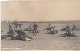 """2041"""" FOTO-CAVALLERIA REGIO ESERCITO(ADDESTRAMENTO AL SUOLO) LIVORNO - Guerre, Militaire"""