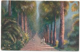 XIND.80.  CALCUTTA - Palm Avenue, Botanical Gardens - Inde