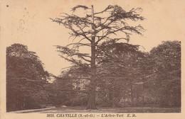 92 - CHAVILLE - L' Arbre Vert - Chaville