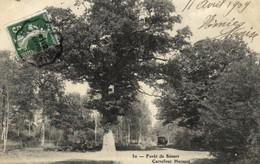 E 3891 - Forêt De Sénart  (91) Carrefour Hersant - Sénart