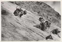 11445.  Foto Vintage Militari Soldati Alpini In Montagna - 16x11 - Guerre, Militaire