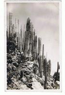 MONACO - Jardin Exotique, Timbre Et Cachet Au Verso - 74 - Exotische Tuin