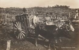 India Postcard Rural Scene Bullock Cart - India