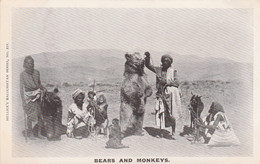 India Postcard Bears And Monkeys - India