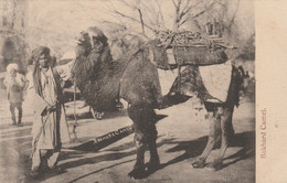 India Postcard Bokhard Camel With Driver - India