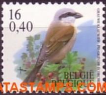 België 2000 - Mi:2982, Yv:2933, OBP:2931, Coil Seal - XX - Birds Gray Shrike - 1985-.. Vogels (Buzin)