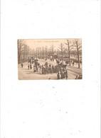 LILLE  AVENUE DES MARRONNIERS EDITION GL N° 28 - Lille